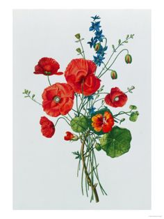 Botanical Study of Poppies, c.1850 Giclee Print at Art.com