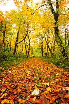 "500px / Photo ""Path of Fall"" by Jason Arney. this appeals to me, it makes me think of the sound of crunching leaves as I'm walking down the path. One of my favorite things to do in fall"
