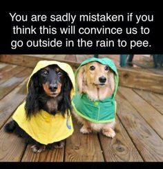 30 Reasons Why You Absolutely Must Have A Dachshund Pup. - Page 23 of 30 - Barmy Pets Cute Puppies, Cute Dogs, Dogs And Puppies, Animals And Pets, Funny Animals, Cute Animals, Animal Funnies, Animal Memes, Animal Humour