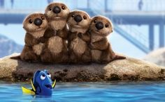 Sea Lions Finding Dory