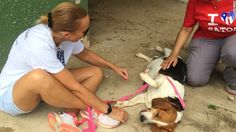 "Video: Saving Pups from ""Dead Dog Beach"" - Orvis News"