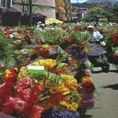 Flower Fair in Medellin, Colombia