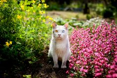 japanese-grandma-and-cat-sitting