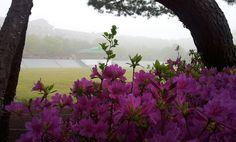 Morning in Korea May 2013