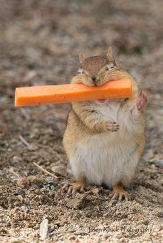 20 Cute Photos Of Animals Eating That Will Make You Smile.