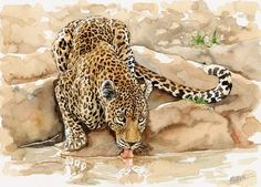 Leopard watercolor