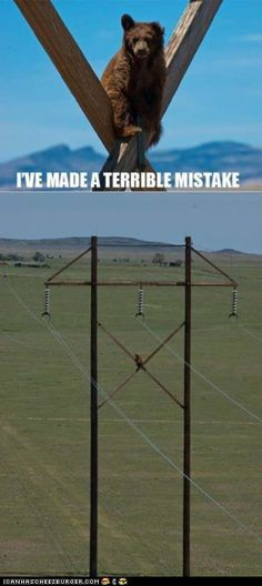 funny pictures - One Might Call It a BEARible Mistake *HIGH FIVE*
