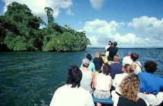 Observación de Aves. Parque Nacional de los Haitises. Sabana de la Mar. Dominican Republic