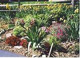 Backyard_Flower_Garden.jpg