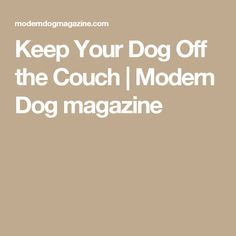 Keep Your Dog Off the Couch | Modern Dog magazine