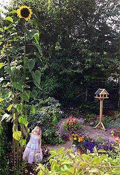 Sunflower 'Giraffe' can reach 5+m in height.