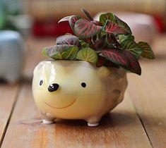 Amazon.com: Cute Hedgehog Flower Pot -- Mini Ceramic Planter for Succulents -- Yellow/Green: Patio, Lawn & Garden