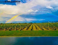 Rainbow Vineyard Dream Relax.... & KEEP the PASSION ALIVE Elephant Hill Vineyard