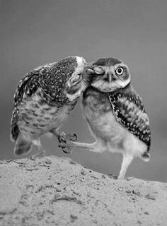 Owls...loving, but watch the eye please! Save the Planet