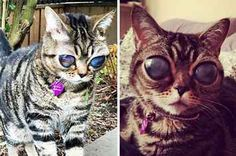 Matilda has a rare disorder involving her retinas becoming detached. The end result has left her blind. Absolutely adorable no matter.    I couldn't begin to fathom how this kitty felt losing her vision. She rocks any way.
