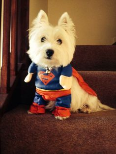westie dog costume - Google Search | Just Because | Pinterest