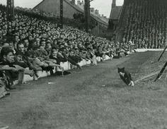 Un gato en Anfield