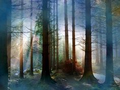 Beautiful Forest Trees