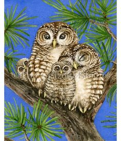 This watercolor painting from the Owl Tree has a loving family of four Spotted Owls. Be sure to check out how this painting was made at: http://tracylizottestudios.com/index.php/post/103-the-making-of-owl-tree