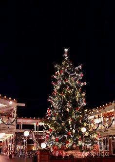 The Old Town Albuquerque Christmas tree, New Mexico