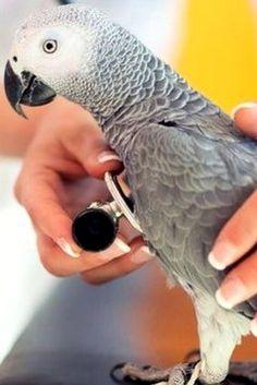 Как сдать анализы попугаю, советы по выбору попугая