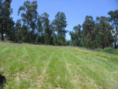 Listed by Agent: Penny-Dee Janse van Rensburg Vacant Land For Sale, Kwazulu Natal, Wakefield, Estate Agents, Outdoor Decor, Plants, Van, Homes, Houses