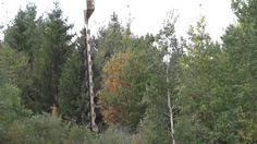 Trimming trees by power line with helicopter