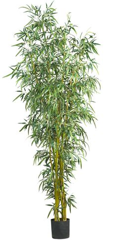 Features:  -Uniquely styled bamboo tree.  -Natural bamboo trunks.  -Perfect for home or office.  Product Type: -Tree.  Plant Type: -Bamboo.  Orientation: -Floor.  Plant Material: -Plastic.  Base Inclu