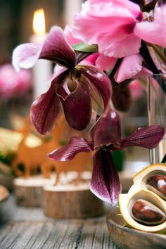 The Slipper Orchid is one of the most interesting and unique orchid flowers. Are you a fan of this unique bloom?