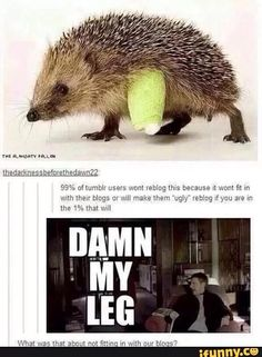 Rule of tumblr: If you post a picture of a hedgehog or an otter, the Sherlockians will find you.