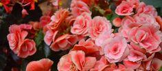 hoa có mùi thơm