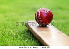 Cricket ball resting on a cricket bat on green grass of cricket pitch - stock photo
