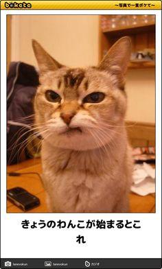 ペットスマイルが運営する、猫に関する情報満載のメディアサイトPetSmile news(ペットスマイルニュース)forネコちゃん。「あなたはこのボケに耐えられるか!?bokete厳選11集~爆笑ネコちゃん編~」についての記事をご紹介します。
