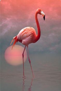 The thing is that, Flamingos are tropical wading birds that are pink in color, which makes them one of the most beautiful, and unique birds in the world. Flamingo Painting, Flamingo Art, Pink Flamingos, Painting Abstract, Pretty Birds, Beautiful Birds, Animals Beautiful, Exotic Birds, Colorful Birds