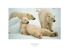 Ice Bears by Michio Hoshino (1952 - 1996). Called one of the most accomplished nature photographers of his era and compared to Ansel Adams, Hoshino specialized in photographing Alaskan wildlife until he was killed by a brown bear while on assignment in Kurilskoye Lake, Russia in 1996. In his honor, I keep this print on my studio wall.