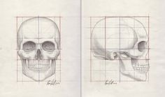skull proportions - Google Search