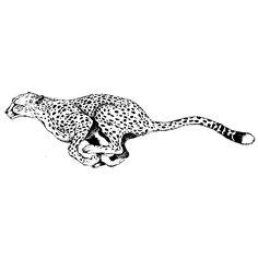guepardo dibujo - Buscar con Google