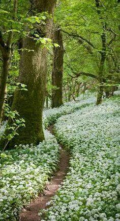 Milton wood, England