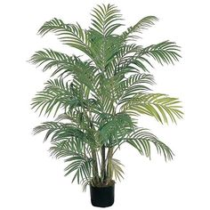 Areca Silk Palm Tree - 4 Feet