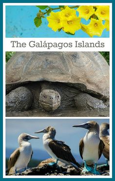 50+ unique plants and animals that live on the Galapagos Islands. Ooooh blue footed booby! So cute!