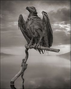 A calcified fish eagle on Tanzania's Lake Natron © Nick Brandt 2013, Courtesy of Hasted Kraeutler Gallery, NY