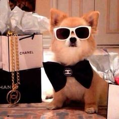 The Daily Cute: 15 Dogs Wearing Sunglasses 15 Dogs, Cute Dogs And Puppies, Doggies, Photos Of The Week, Dog Pictures, Puppy Love, Fur Babies, Cute Animals, Chihuahua