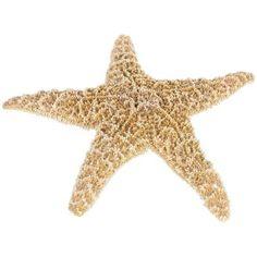 How to Bleach Starfish