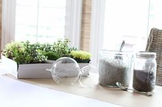 How To Make A Terrarium At Home