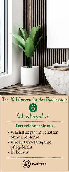 Plants for the bathroom: 10 types for the wellness oasis - PlanturaTop 10 plants for the bathroom: place: Schusterpalm.From the dreary bathroom to the wellness oasis - at Plantura you can find out which Bathroom Plants, Bathroom Signs, Bathroom Faucets, Diy Bathroom, Cottage Style Bathrooms, Rustic Bathrooms, Oasis, Toilet Storage, Wellness