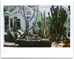 Cactus House   Kaitlyn Harun