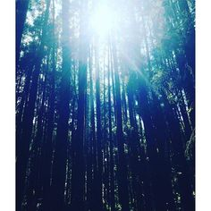 【mari.kobo】さんのInstagramをピンしています。 《I could feel the negative ions! #mountains #view #sun #walking #forest #travel #taiwan #negativeions #trecking #台湾 #森  #山 #台湾旅行 #台湾生活 #海外生活 #太陽 #木漏れ日 #木洩れ日 #日本語教師 #筋肉痛 #肌肉酸痛 #マイナスイオン #台灣 #嘉義 #阿里山 #爬山 #負離子》