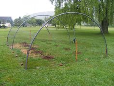 They use old trampoline frames and netting to keep animals from away from their blueberry plants.
