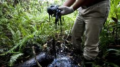 Human rights impacts of oil pollution: Ecuador