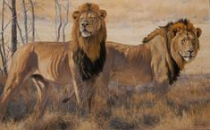 Kim Donaldson Gallery Wildlife Art, Big Cats, Horses, Gallery, Artist, Animals, Google, Animales, Roof Rack